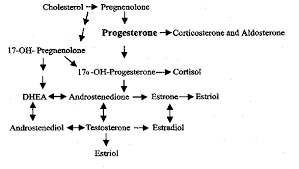 Progesterone cream male hair loss