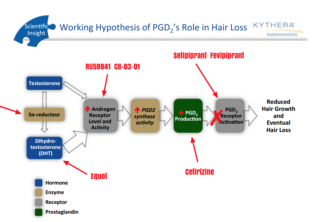 Interesting Diagram on How DHT and PDG2 Play a Role in Hair Loss